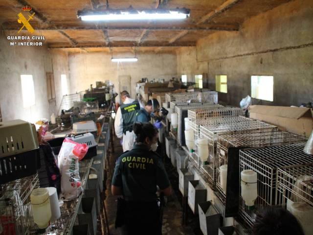 500 perros han sido rescatados por el SEPRONA