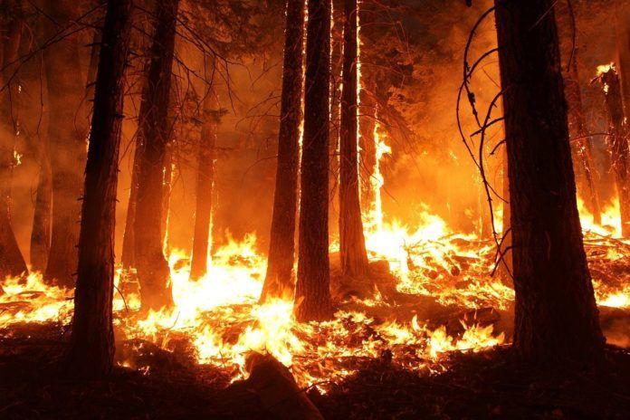 WWF exige medidas a la alarmante tendencia de incendios forestales