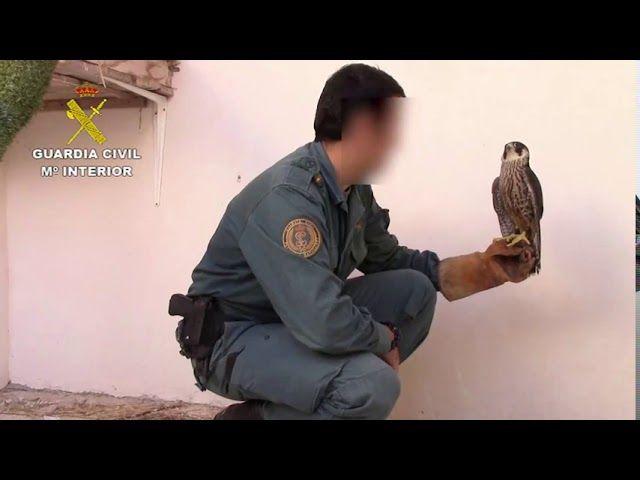 La Guardia Civil realiza más de 24.000 actuaciones relacionadas con la protección animal