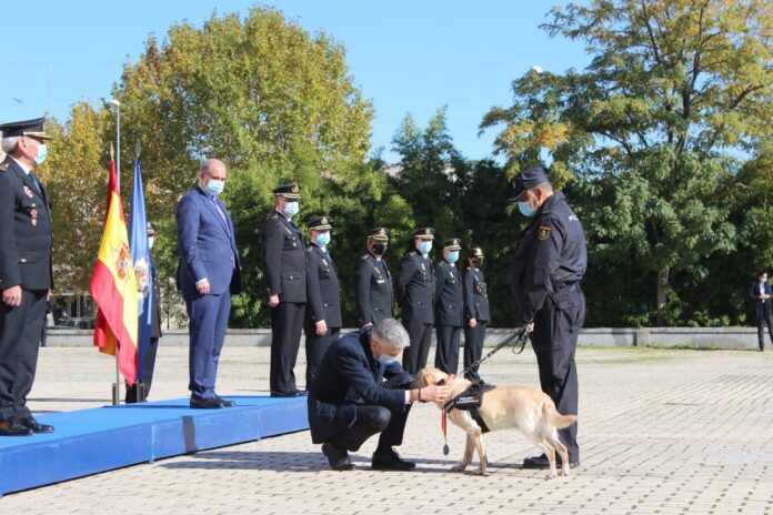Grande-Marlaska preside el acto de condecoración a seis perros de la Policía Nacional