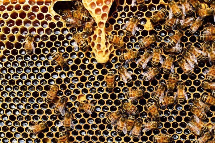 Enjambre de abejas miel