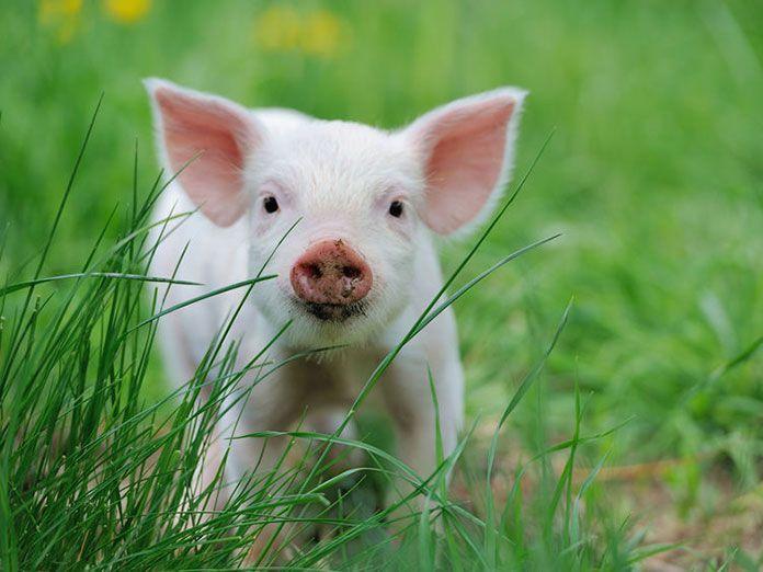 El 75% de los patógenos que afectan a la salud humana son de origen animal