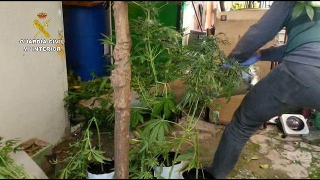 Operación Huluxu de la Guardia Civil contra una red internacional de tráfico de marihuana
