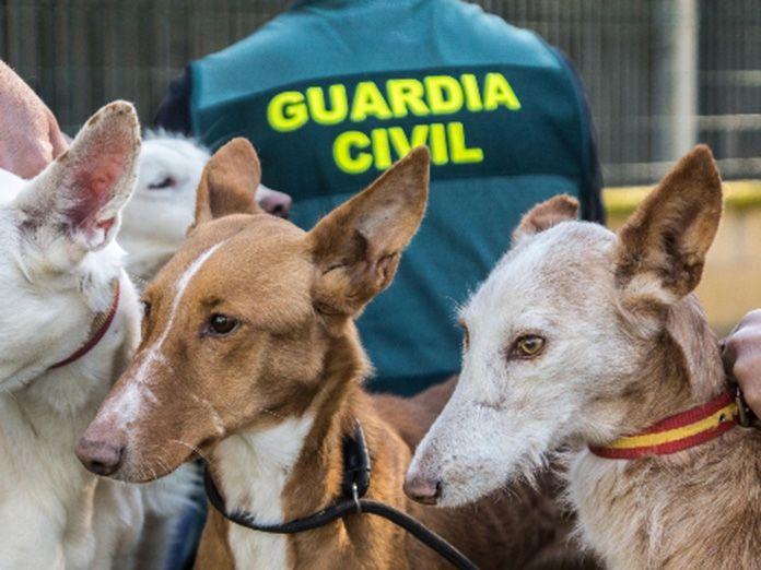 Perros maltratados y abandonados en tiempos del Covid