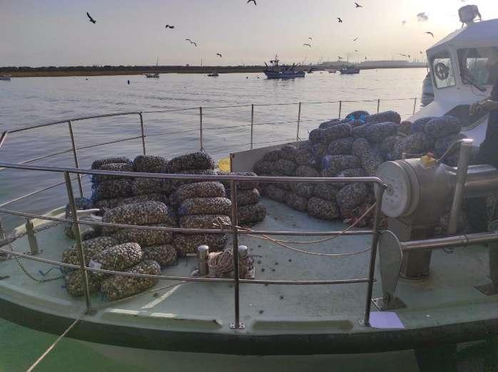 Inspección Pesquera ha decomisado en Huelva 11.312 kg de boquerones y 8.472 Kg de chirlas