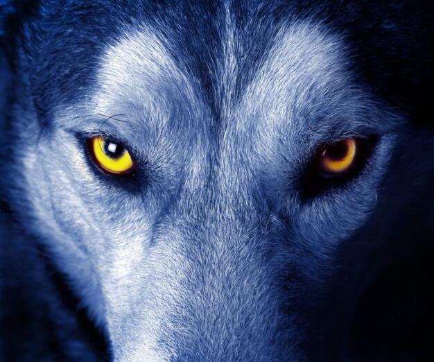 """""""¡Que viene el lobo!"""", el aviso de Ucrania por una posible gran guerra que ignoramos los medios"""