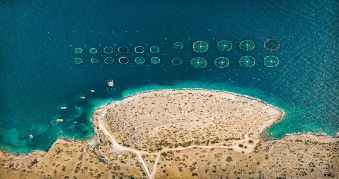 Pesca - Imagen de AIS Group