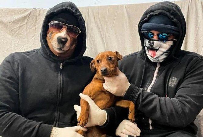 Ladrones de perros - Vice