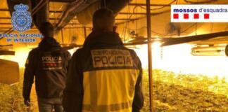 Desarticulada una de las mayores mafias chinas en el cultivo y distribución de marihuana